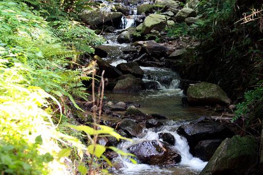 山道の横にはきれいな清流が流れている