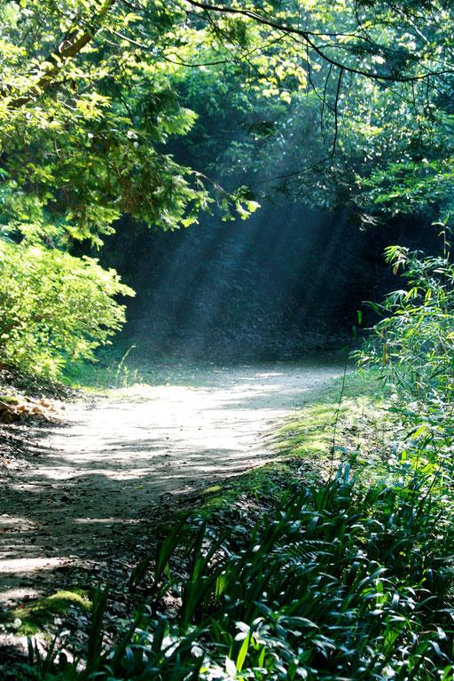 薄暗い山道にまぶしい光が差し込んでいる 妖精か妖怪がでてきそうな雰囲気