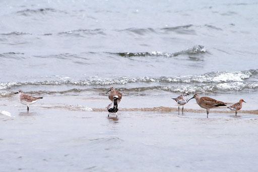 仲のいい水鳥たち