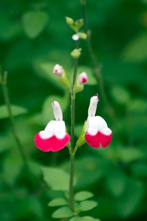 初めて見た鮮やかな花