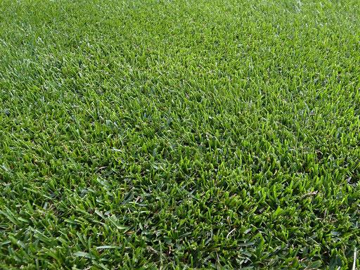 ゴルフコースのようなラグビー場の芝