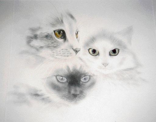 3 Katzen