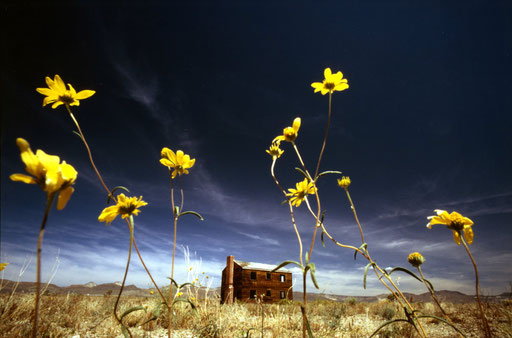 Seen through spring wildflowers is a wooden house remaining from the 1955 Apple II 29-kiloton 'shot' (the term for a nuclear test detonation); it was one of the 14 'shots' in the Operation Teapot test series at the Nevada National Security Site (N2S2).