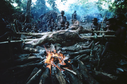 Efe pygmies of the Ituri Forest ( in the northeast of the Democratic Republic of the Congo) prepare a banquet...