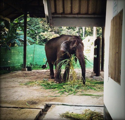 elephanten hospital in lampang