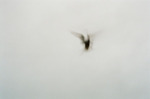 "From the series ""Seagulls"", Djúpavík, Iceland, © Nina Kreuzinger, 2010."