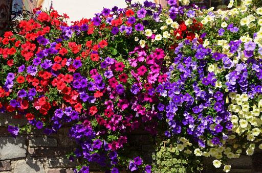 Blumenschmuck an einem Haus am Walchsee