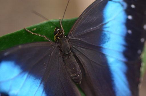 Schmetterlingspark Neuenmarkt