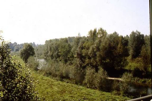 Irgendwo in den Donauauen