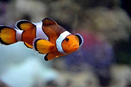 Dubai Aquarium (Foto: Daniel Schlenk)