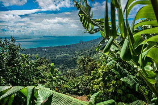 Während der Inselrundfahrt kommst du auch zum wohl schönsten Aussichtspunkt der Insel