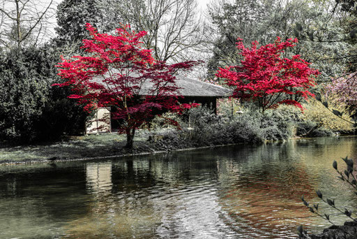 Beim japanischen Teehaus im Englischen Garten/Near the Japanese Teehouse in English Garden Munich