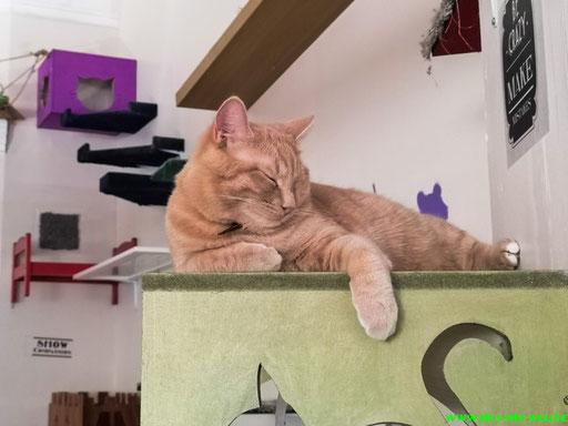 Im Katzencafe/Glasgow