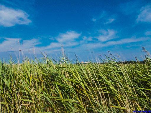 Weites Land hinterm Deich (Foto: Vanessa Schlenk)