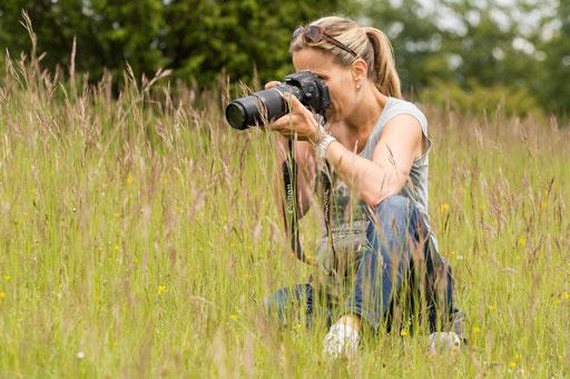 Schmetterlinge fotografieren in der Eifel (und schon wieder ein Bild von Josef - danke!)