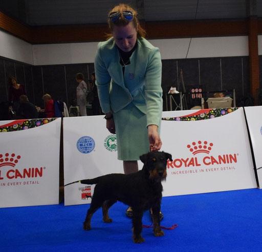 EUROPEAN DOG SHOW 2018. POLAND - Champion class V2