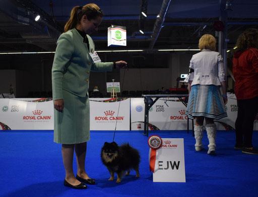 EURO DOG SHOW POLAND 2018 - OH MAMMA MIA DANUBE DWARF - V1, JCAC, JBOB & JUNIOR EUROPEAN WINNER 2018.