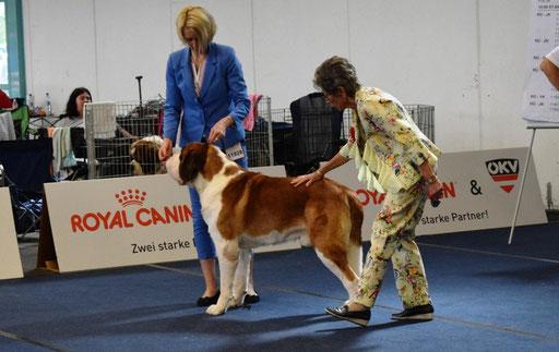 EUROPEAN DOG SHOW 2019. Austria - Champion class - Excellent