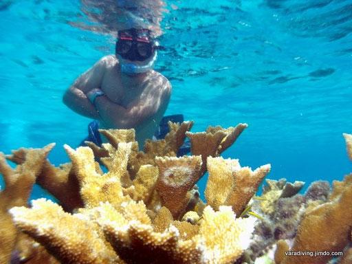 Varadiving dive master