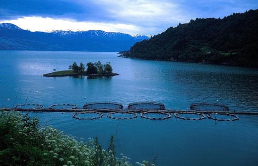 Norvège,08 1997,élevage de saumons dans un fjord