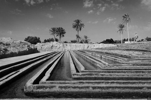 Tunisie,09 2011,irrigation du chott el jerid