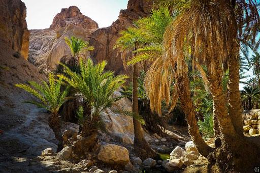 Tunisie,09 2011,oasis de Montagne(Chebika)