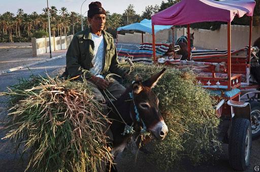 Tunisie,09 2011,oasis de Nefta