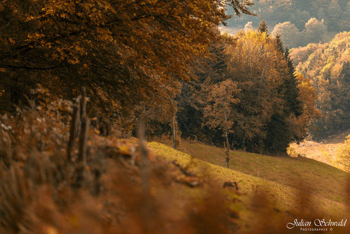 Nikon, D800, Nikon D800, f/2, f/2.0, Offenblende, Bokeh, Samyang, WalimexPro, Bower, Rokinon, 135mm, 135mm f/2.0, WalimexPro 135mm f/2, Samyang 135mm f/2, Julian Schwald, Schwarzwald, Landschaft, Herbst, Bäume, Weg, Wandern, Wanderweg
