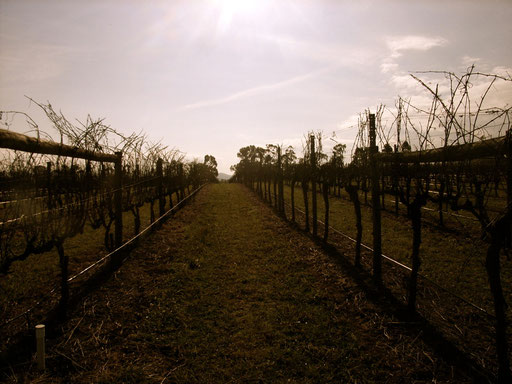 Rochford Vineyard