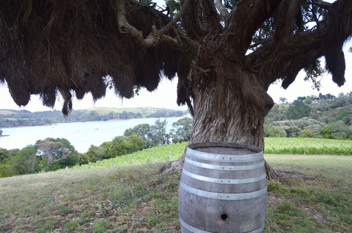 Goldie vineyard, Waiheke Island