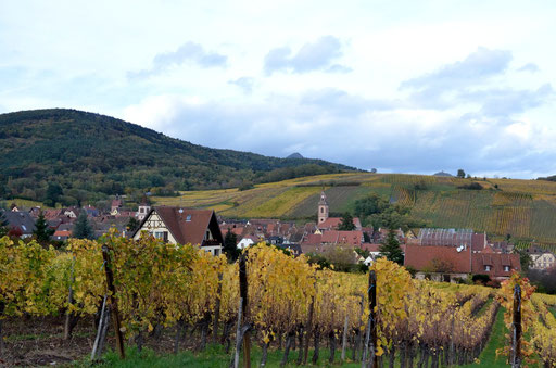 Riquewihr from the vineyards