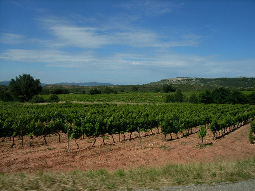 Extreme dry soils of Provence