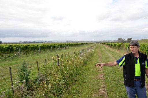 Viticulturist explaining Organic methods Keltern Vineyard Hawke's Bay Villa Maria