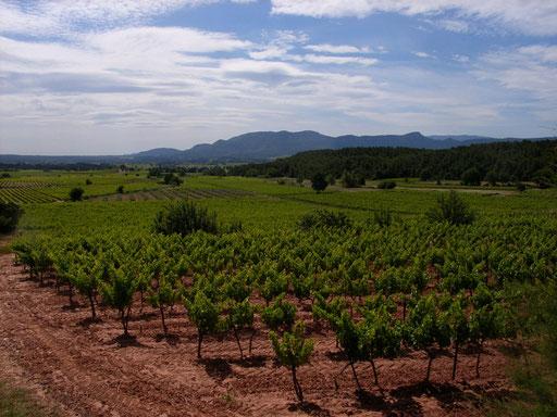 Road to Domaine Saint-Ser