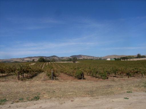 Dusty Vineyards Barossa Valley