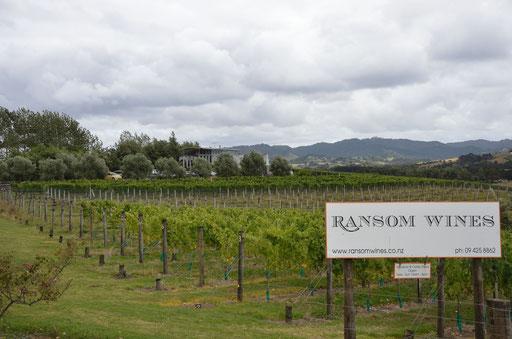 Ransom Wines, Matakana