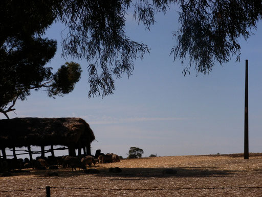 Farm on the way to the Barossa Valley