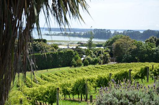 Emeny Road vineyard, Tauranga