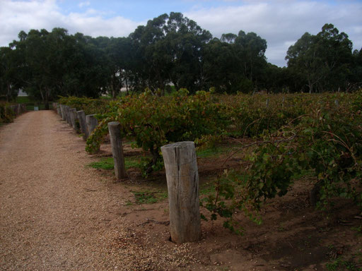 Langmeil Vineyard - Oldest Shriaz vines in the Barossa