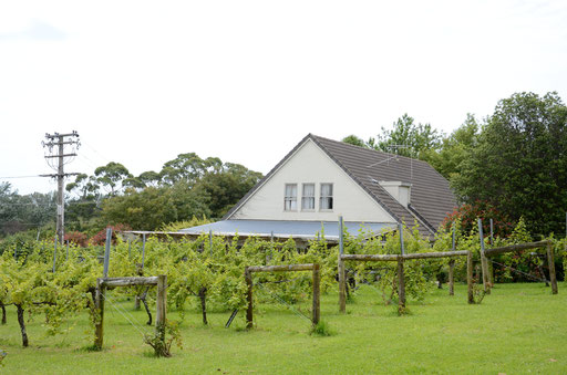 Morton Estate vineyard, Tauranga