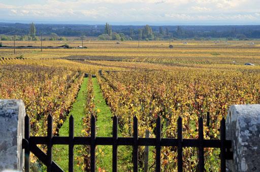 Vineyard outside Volnay