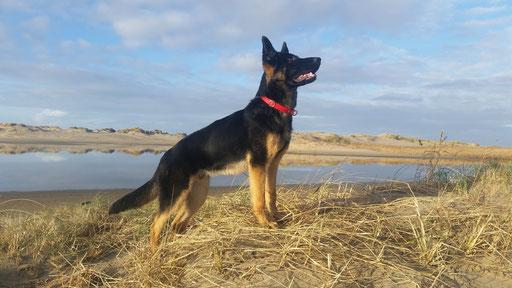 Auf das Foto klicken um auf Noahs Working-Dog-Profil zu gelangen