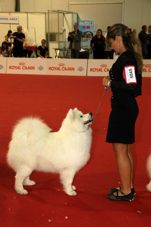 world dog show Milano 2015 4° ecc. open class