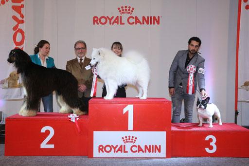 Dreamy vince il BIS giovani su oltre 60 cani presenti ... grazie al Giudice Bruno Nodalli