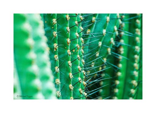 Kaktusviech........