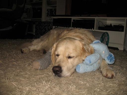 """Auch ein großer """"Bär"""" braucht einen Freund; besonders, wenn das Füßchen kaputt iss..."""
