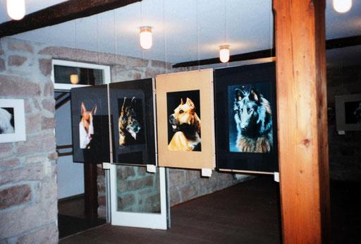 Hundeblicke 1997
