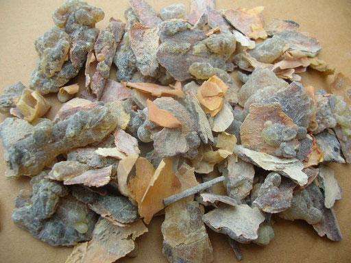 Olinanum Weihrauch Rinde Frankincense bark Boswellia sacra Oman