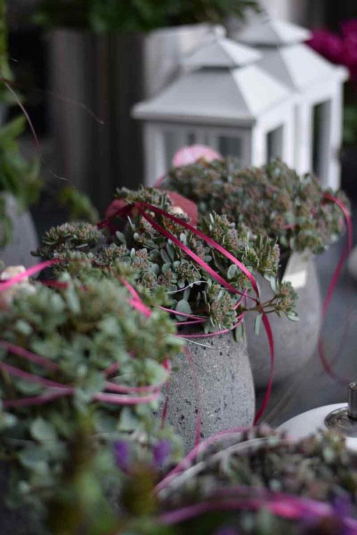 Pflanzen für den Aussenbereich
