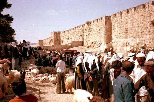 die hohe alte Stadtmauer - eine tolle Marktkulisse